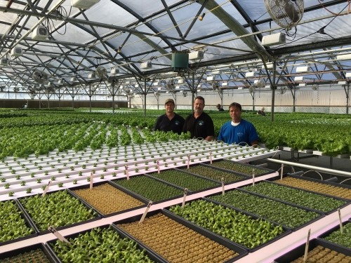 The Netherlands used LED-assisted lighting to stimulate lily yield growth