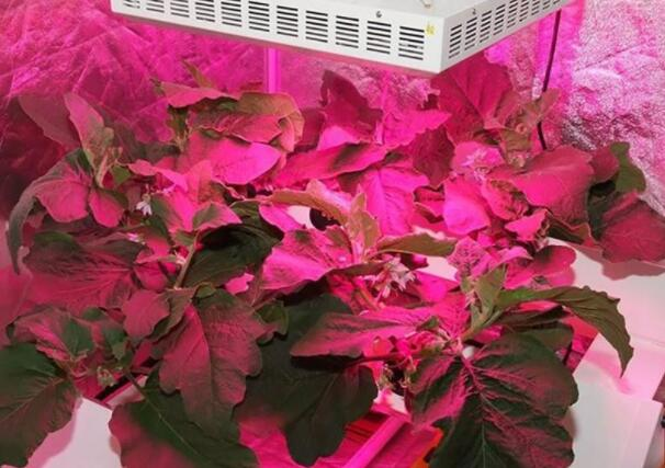 Three common errors of LED plant lighting