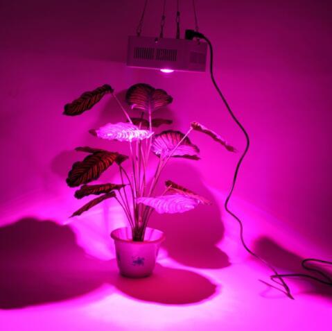 COB Integrated Chip Full Spectrum LED Grow Light