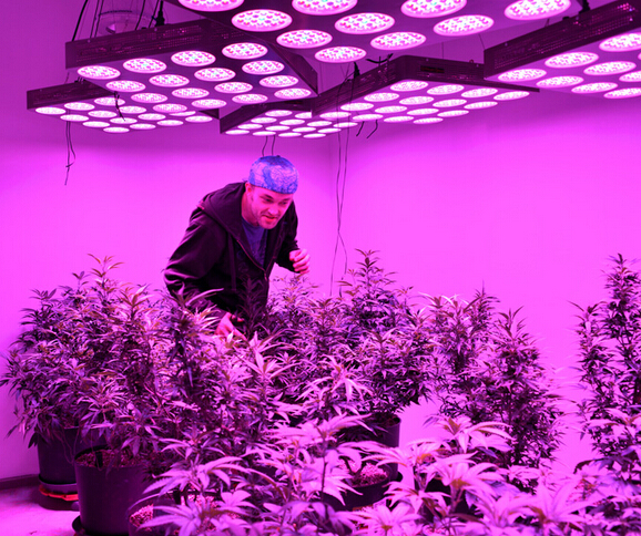 led plant lights led grow lights marijuana sales increase 869